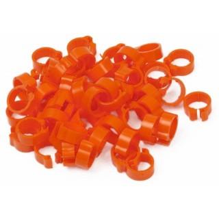Orange Pigeon Rings