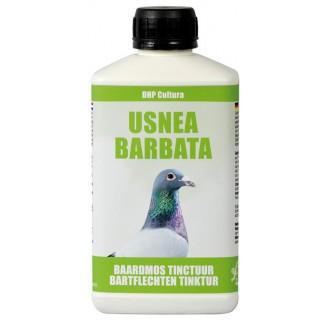 Usnea Barbata